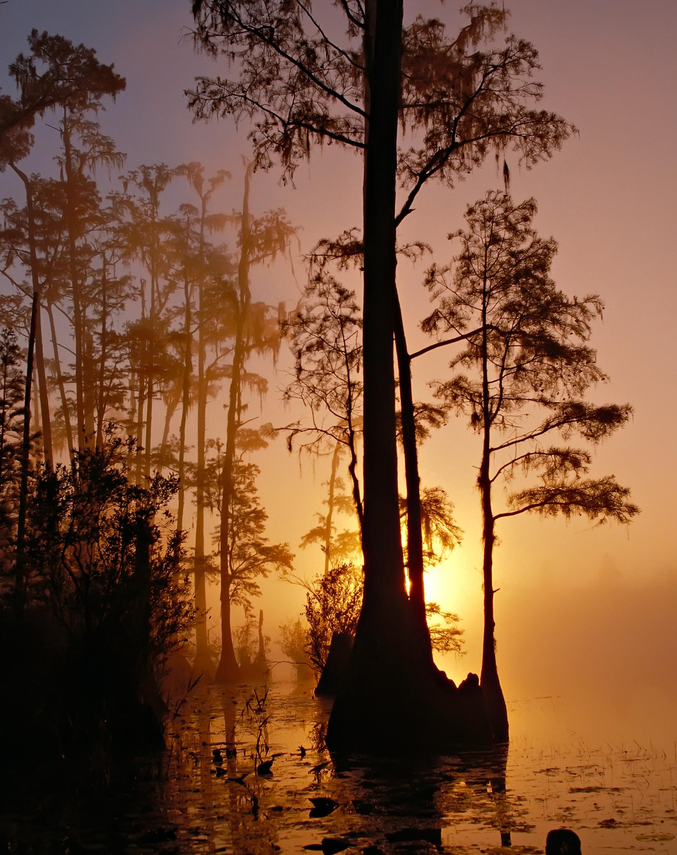 Sunset in the swamp, marsh, sunset, sun, orange, trees, vegetation, nature