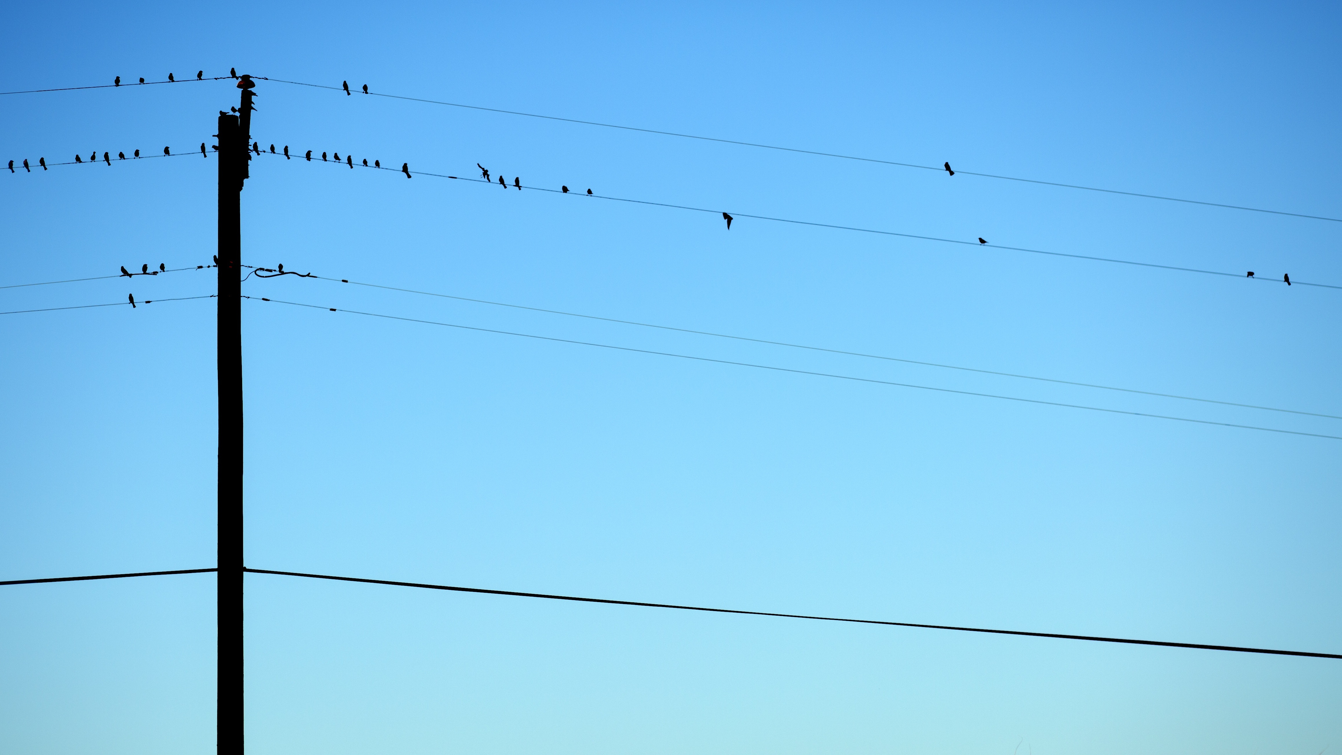 Birds on wires, cables, electricity, birds, posing, rest, rest, sky, blue, shadow, post, light