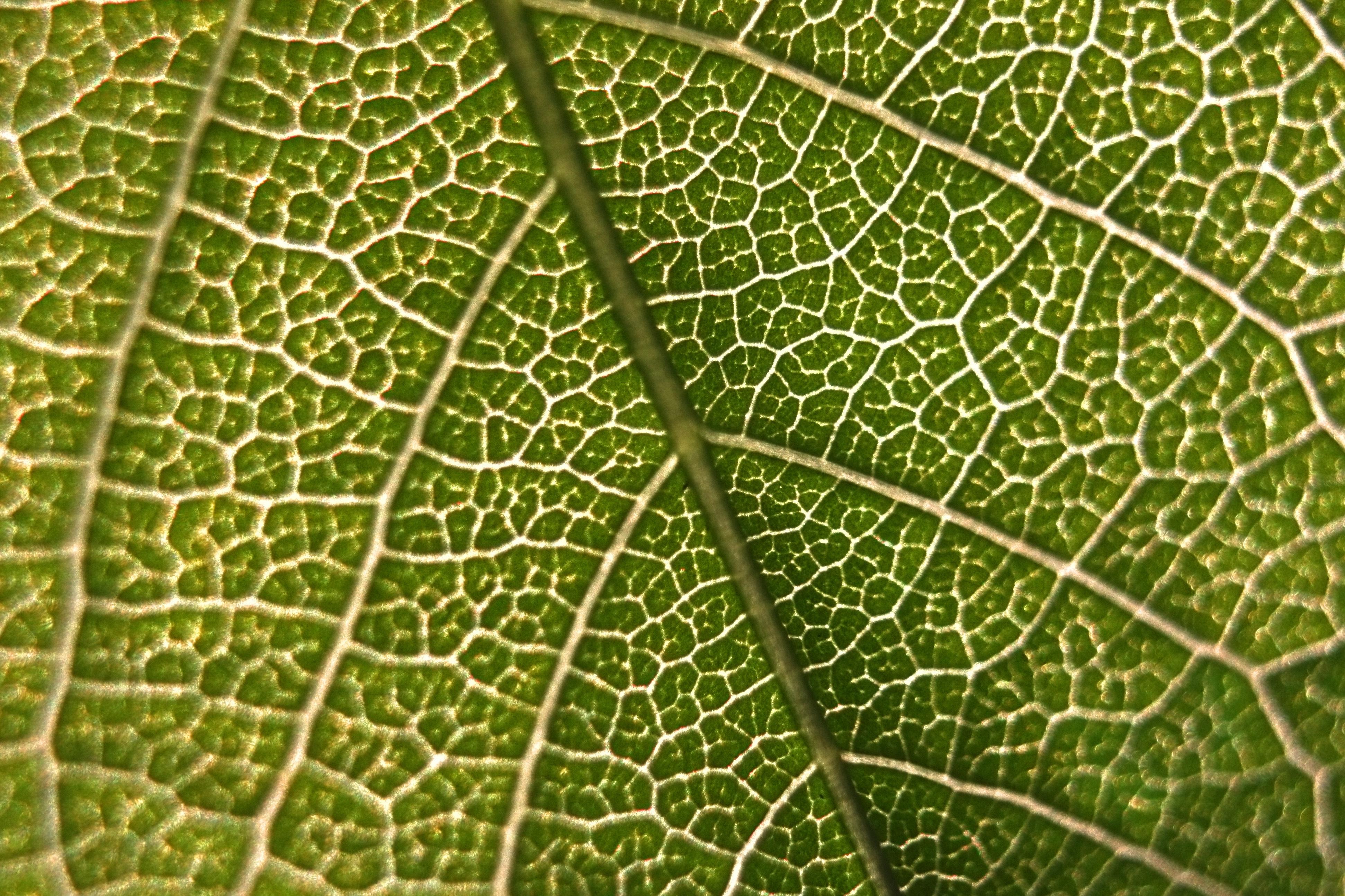 Close-up of leaf, green leaf, leaflet, nature, natural, plant