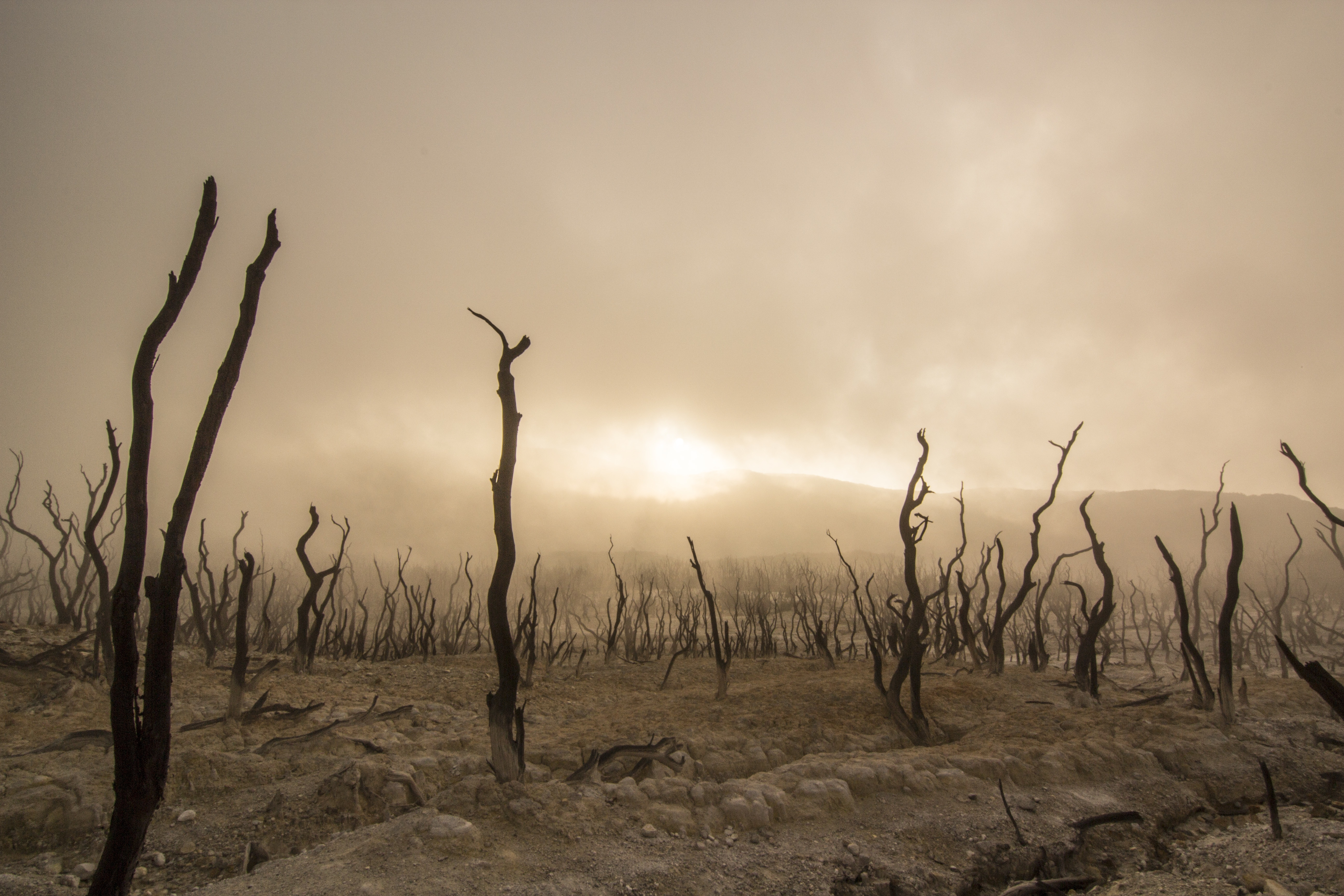 Kota Garut, Indonesia, landscape, martian, trees, dry branches, red, alien, scary