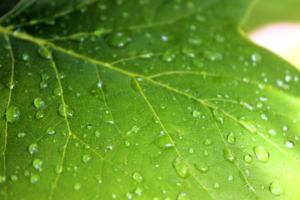 Water droplets on leaf, water drops, nature, green, life, earth, water droplets