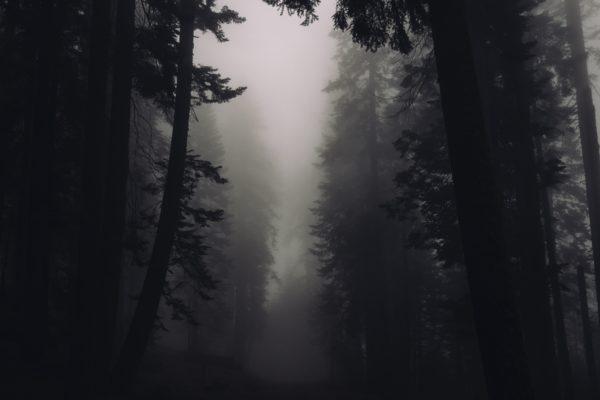 Dark Forest, forest, dark, cold, fog, haze, trees, nature