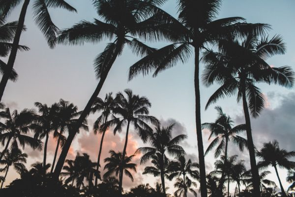 Silhouettes of palm trees, contrast, shadows, street, palm, california, silhouettes, palm trees