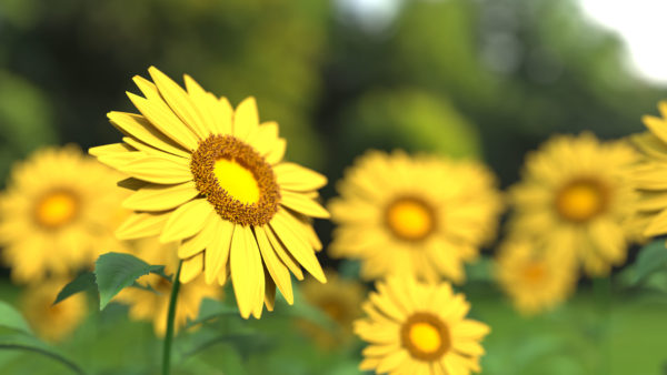 Beautiful yellow daisies, daisies, flowers, yellow, petal, spring, summer, life