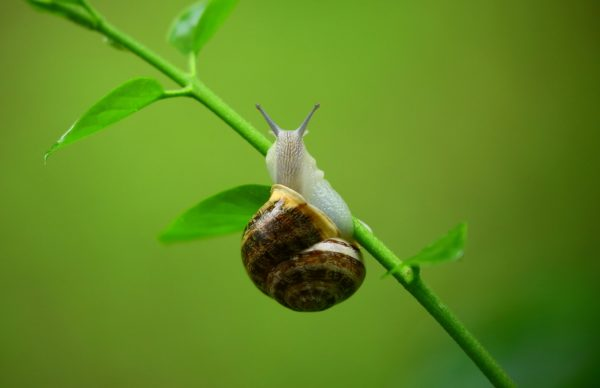 Snail crawling, snail, animal, slug slime, house, leaves, branch, nature