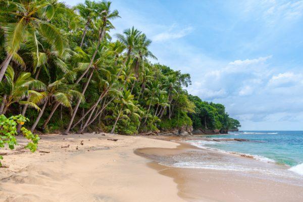Paradise beach, beach, coast, ocean, sea, sand, palm trees, paradise, relaxation, naturaelza, travel