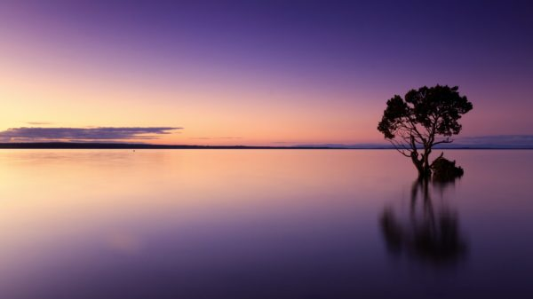 Calm shades of purple, landscape, violet, peace, sunset, lake, water, tree, alone, calm