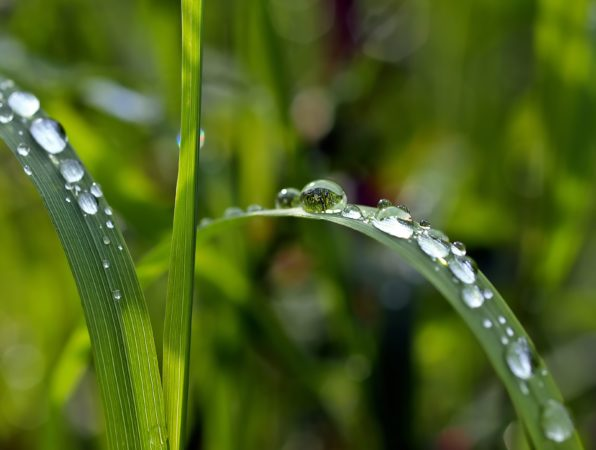 Dewdrops on plants, water, drops, green, nature, raindrops, dew
