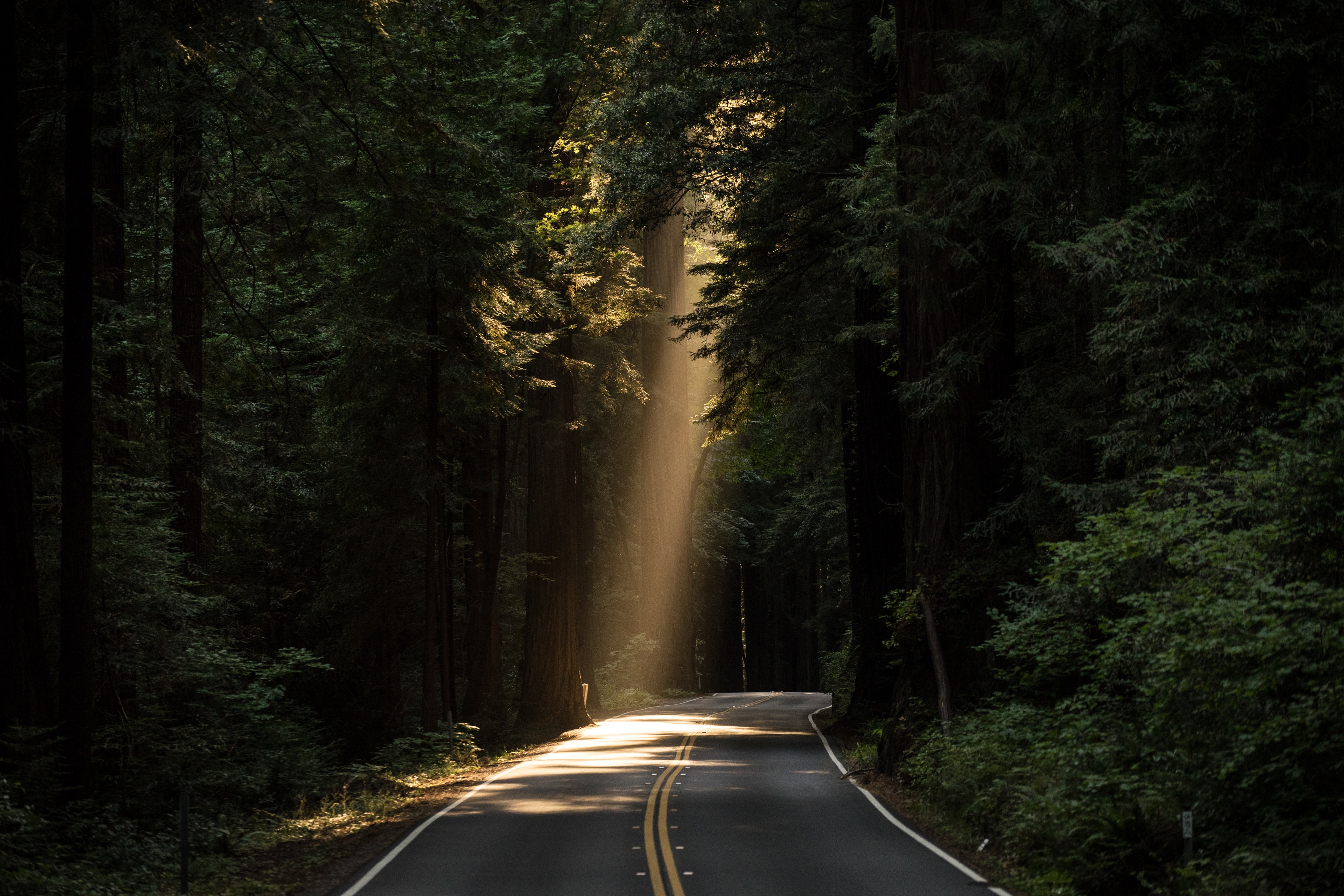 Sunbeam on the road, route, street, nature, trees, pines, pavement, sun