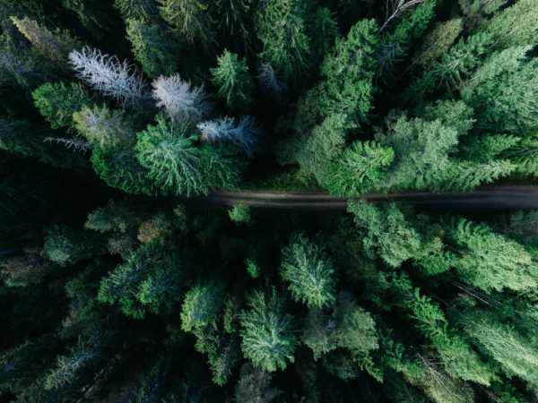 Road between pines, trees, forest, road, route, green, nature