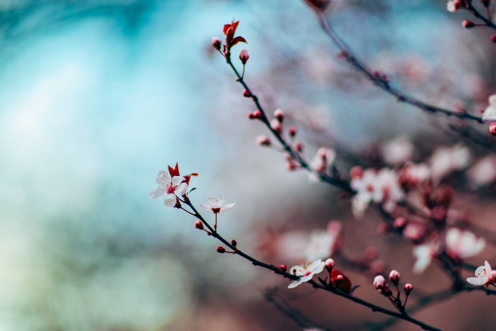 Spring bloom, spring, flower, tree, flowers, nature