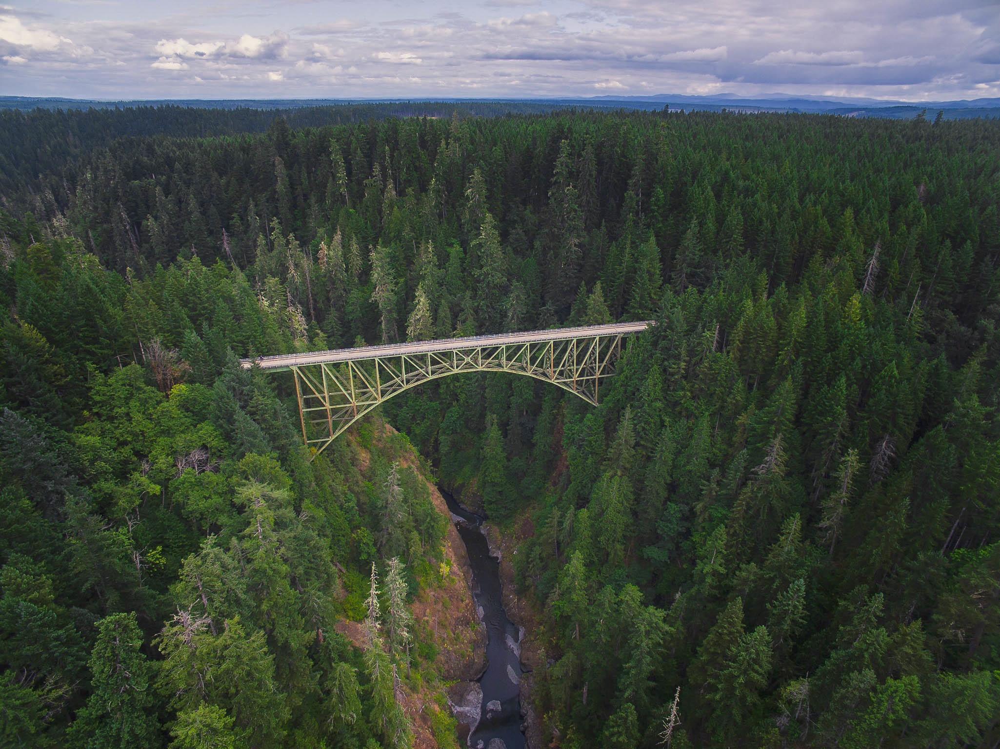 Arch bridge, bridge, forest, pine trees