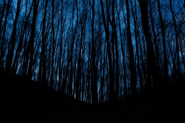 Forest at dusk, forest, dark, night, trees