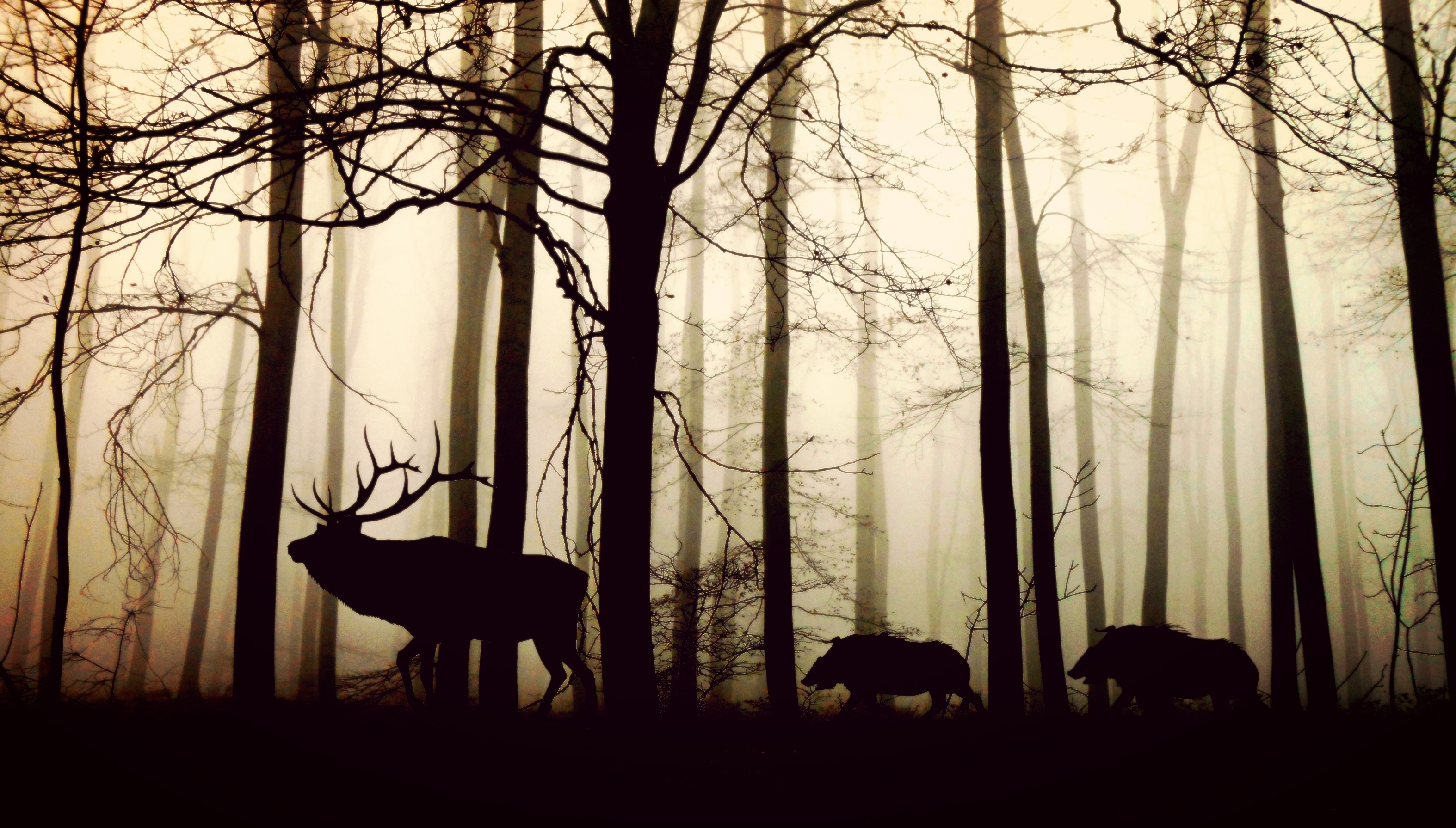 Moose and wild boars in the forest, trees, forest, animals, walking, shadow, branches,