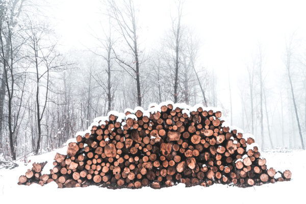 firewood in snow, snow, snowfall, trunks, cold