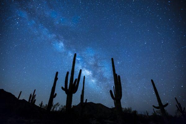 silhouettes in the desert, cactus, silhouette cactus, sky, stars, night, sunset, desert